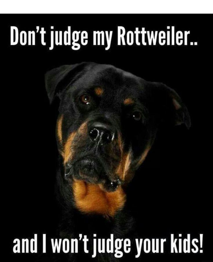 German Shepherd Dog Appleridge S Never Say Never Judge
