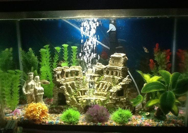Aga Fish Tank : Fish tank Setup