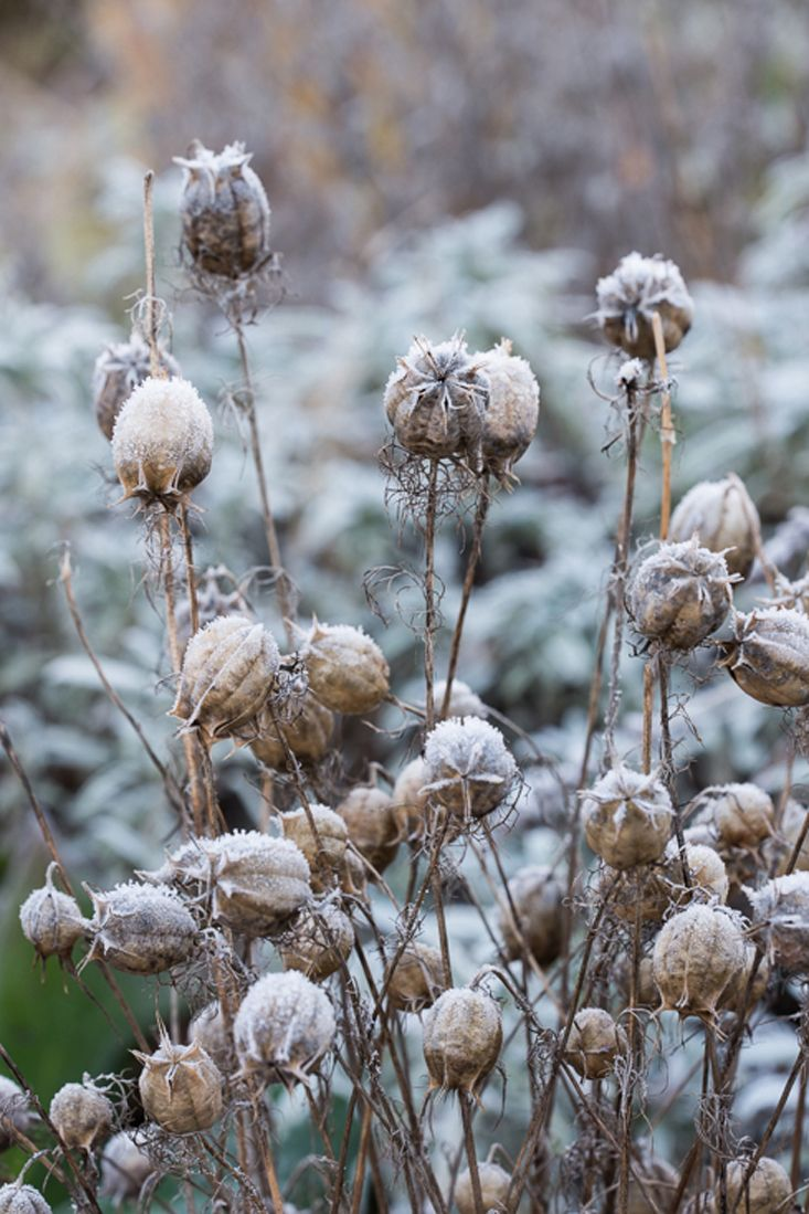 34 best images about winter garden on pinterest gardens snow