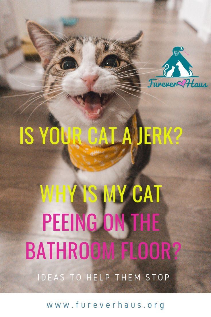 Why is my cat peeing on the bathroom rug? Here are five