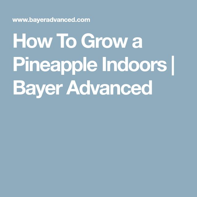 How To Grow a Pineapple Indoors | Bayer Advanced