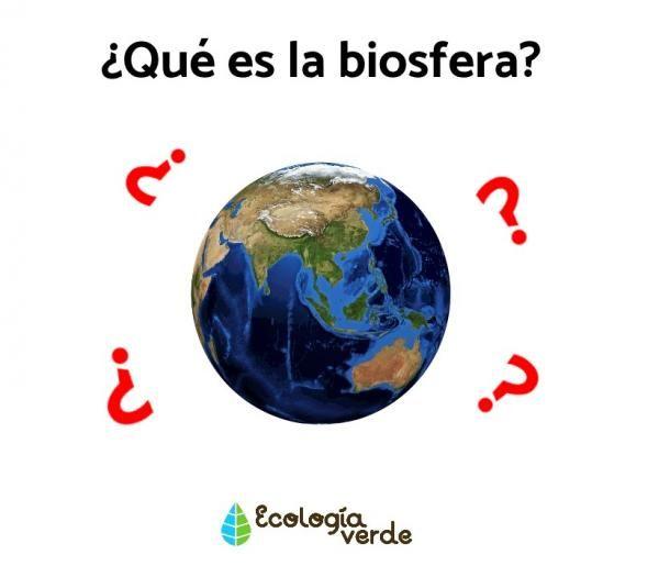 Qué Es La Biosfera Capas Y Características Resumen Capas De La Tierra Capas Biomas