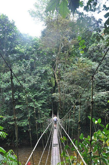 Gunung Mulu National Park, Crossing a bridge en-route to Camp 5 by nic0704, via Flickr