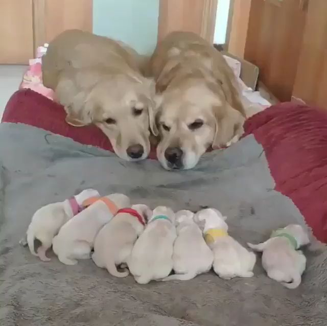 Cute Dogs Family