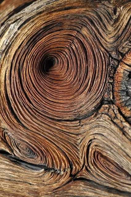 from Parker tree-rings dating method