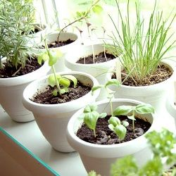 How to Grow 6 Commonly Used Herbs at Home... perfect for fresh flavor all year long!