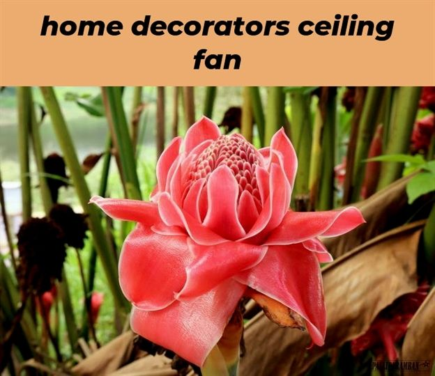 home decorators ceiling fan 86 20181119064408 62 home decor stores rh pinterest com Lime Green Home Decor Decorating with Lime Green Accents