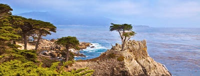 Lone Cypress - 17 Mile Drive - Monteray, California