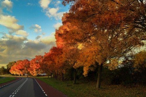 Free Photo Tree Autumn Fall Acacia Landscape Park Forest Yellow