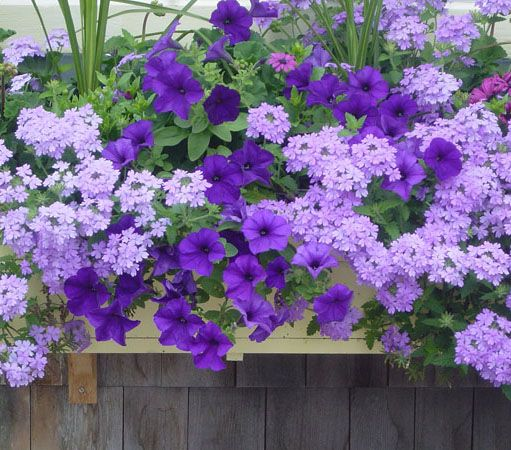 nantucket window boxes | officially over. Here is a picture of someone else's window box ...