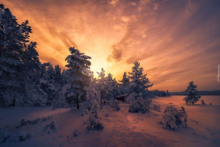 Zima, Śnieg, Las, Drzewa, Zachód słońca