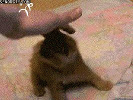 Proof That There Are Real Ninjas That Only Cats Can See