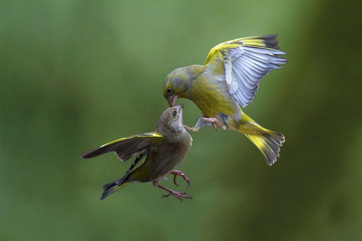 Flying Kiss 12 by Marco Redaelli on 500px