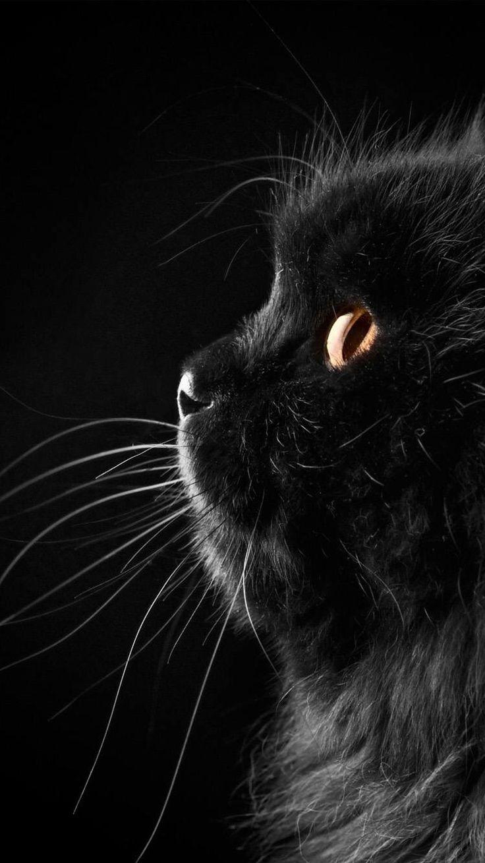 Pin by Paula Kappes on Cute Cute black wallpaper