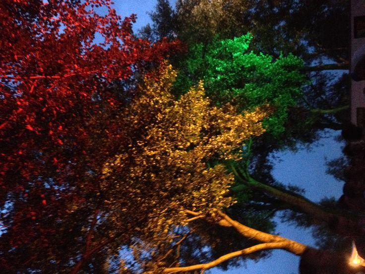 Rasta color tree