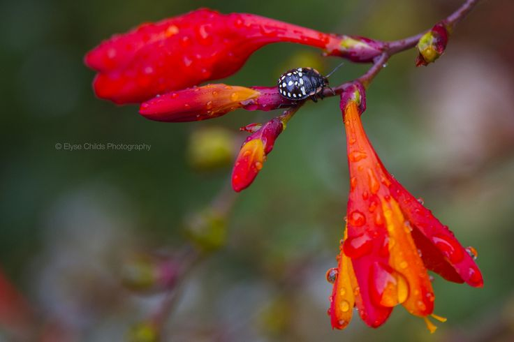 Summer rain in the garden (Explored)   © Elyse Childs Photography