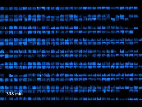 Biopixels - YouTube