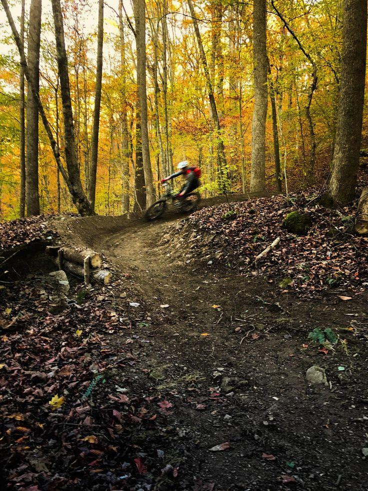 Fern Gully trail, Sugarcamp Mountain, Kentucky. Photo: thortonwilder00