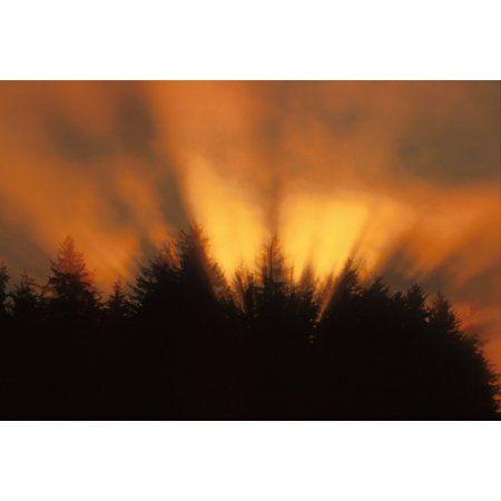 Sunrise Fog Trees Tongass Natl Forest Juneau Southeast Alaska Orange Canvas Art - John Hyde Design Pics (16 x 11)