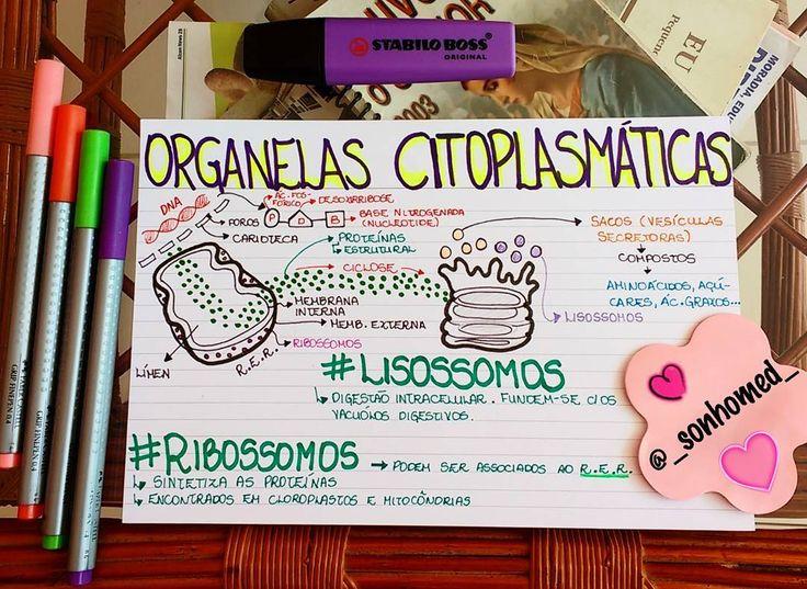 """367 curtidas, 17 comentários - É Por Amor! (@_sonhomed_) no Instagram: """""""" Faça valer a pena ... """" Olá, gente!! Mapinha sobre ..... ⏺ORGANELAS CITOPLASMÁTICAS ⏺ Beijão! ❤…"""""""