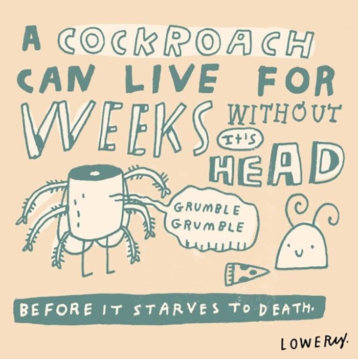 15 Illustrations of Random Fun Animal Facts to Tell at Work