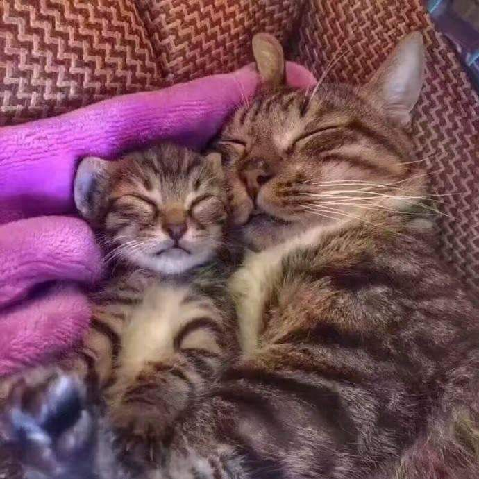 The cat brought back a kitten which looked just like his son. - Album on Imgur