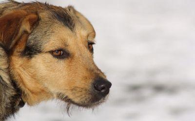 In Romania i cani randagi insegnano l'educazione stradale alle persone