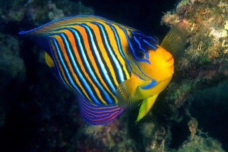 pesci tropicali coloratissimi - Cerca con Google