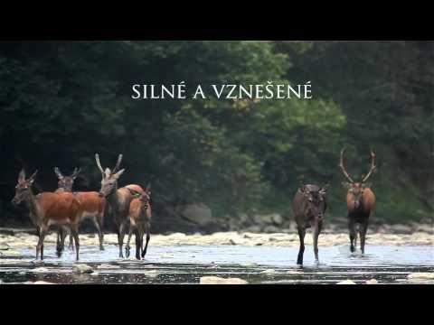 Slovenský dokument Vlčie hory bude vysielať National Geographic v 118 krajinách sveta! | Filmkult.sk