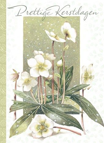 *Marjolein Bastin ~ Hallmark! Not sure what the greeting says (likely Dutch), but I love the flowers of the Lenten Rose (Hellebore), which blooms early in March.   A favourite in Europe, not as common here in North America.