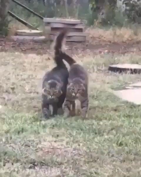 Funny Cat Images Video Memes Citas para amantes de los gatos  – Katzen // Katzenliebe // cutecats