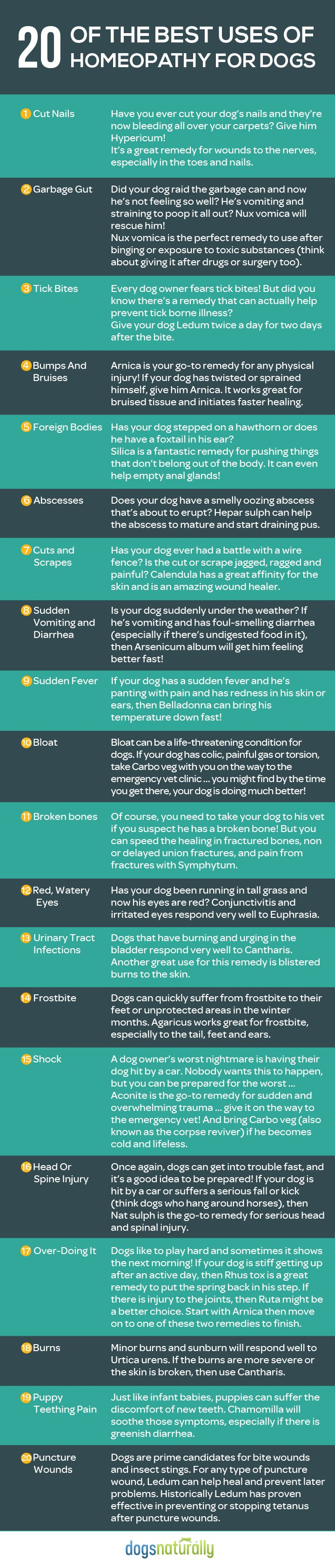 20 Natural Homeopathic Remedies for Dogs, how to administer & how much to give (in full article)