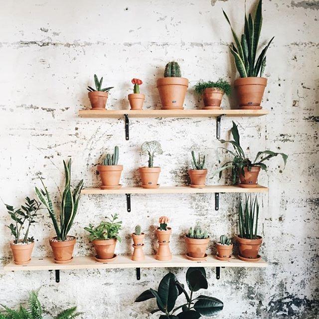 Succulent shelf perfection.   : @espaijoliu