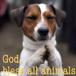 God bless all animals: Jack Russells, Prayer, Animals, Dogs, Pets, Funny, Puppy, Friend