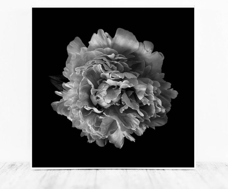 Excited to share the latest addition to my #etsy shop: www.cristylclear.com Black and White Flower Photograph, Floral Photography Wall Art, Floral Photography Print black and white photography download Digital Photos #art #photography #black #housewarming #christmas #white #digitalphotos #blackandwhite #photographydownload http://etsy.me/2iXmiWf