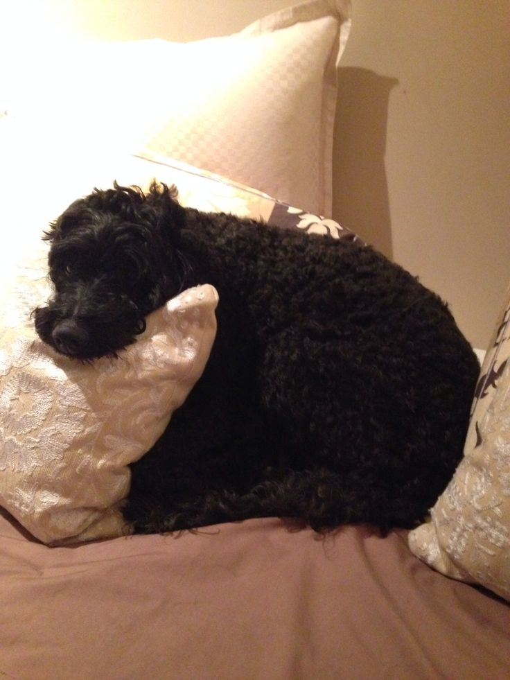 I love your pillows mommy!
