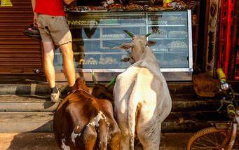 Beim Kuchen kaufen in Gokarna wollen auch die Ziegen mitmischen