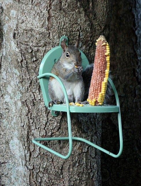 Sitting on a tree nibbling..