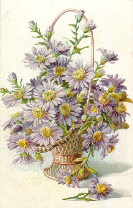 Small basket of light purple asters, 1908.