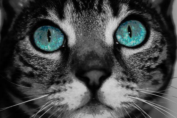 Bengal Cat, FineArt Photographic Print, Bengal Eyes, Cat Eyes, Turqoise, Photography, Nature, Feline, Art, Black and White