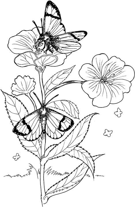 flower and butterflies coloring pages - photo#48