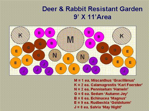 Deer Resistant Plants | How Sweet It Is Produce Market & Garden Center | Eden, Maryland