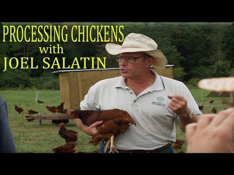 JOEL SALATIN Processes Chickens HD - YouTube
