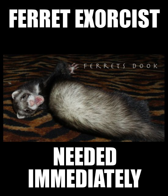 46 Best Ferret Cage Ideas Images By Noah Lydon On
