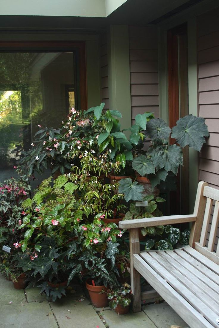 best begonias images on pinterest succulents exotic plants and