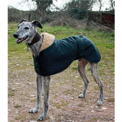 Greyhound,Saluki or Whippet Hunter Dog Coat