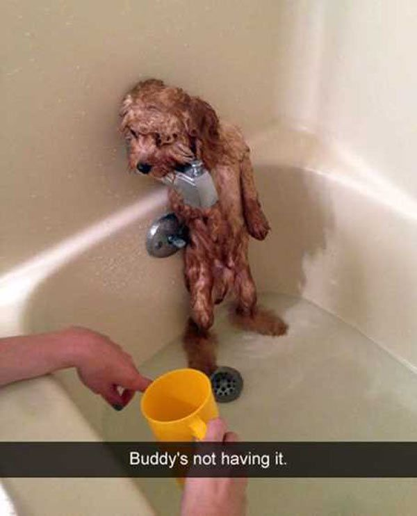More of the funniest funny Snapchats humor from around the Internet. Crazy dogs, stupid cats, & delightfully weird people gettin' laughs on. WTF hilarious
