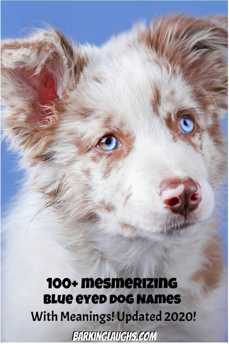 Over 90 Of The Most Hypnotic Blue Eyed Dog Names In 2020 Blue Eyed Dog Names Blue Eyed Dog Dog Names