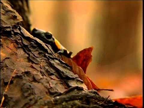 Tíz Park - Őrségi Nemzeti Park promó - YouTube