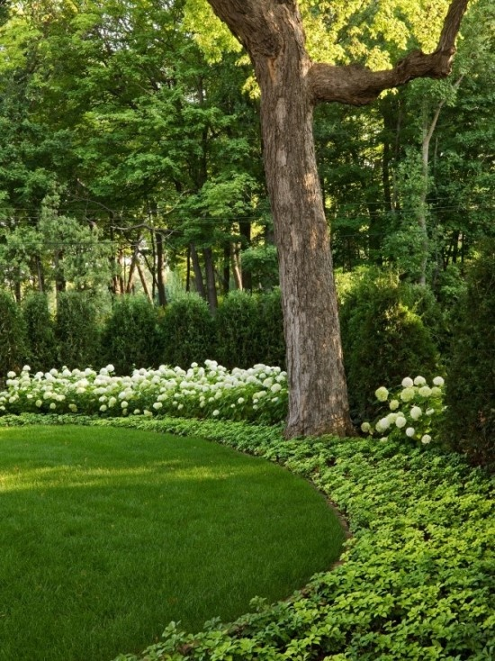 Landscape Borders Plants : Hydrangea hedge gardens hedges and flower
